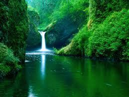 صور وخلفيات طبيعية جميلة خليفات مياه وشلالات خلفيات خضراء