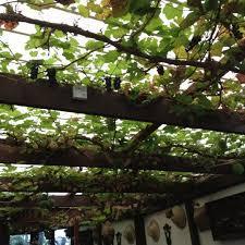 photos at the terrace garden cafe 7 tips