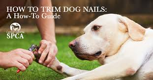 how to trim dog nails a how to guide