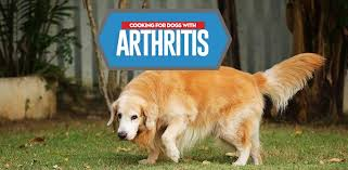 arthritis t for dogs how you should