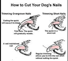 clipping claws a sore subject