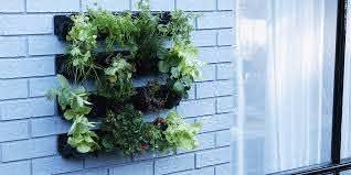 How To Plant A Vertical Garden Bunnings Warehouse