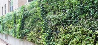 ideas to inspire your first living wall
