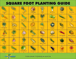square foot planting guide square