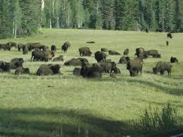 Jesse Mattes Jeffrey Schmidt And Alan Sader In American Buffalo ...