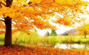 hd autumn scenery wallpaper hd wallpapers