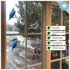Anti Collision Window Clings Prevent Window Strikes Kingfisher Birds Window Flakes