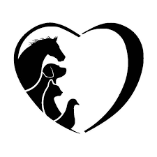 12 7 10 9cm Horse Cat Dog Vet Animal Lover Vinyl Car Sticker Creative Love Cartoon Window Decorative Decals C6 1342 Sticker Vinyl Stickers Coolstickers Magnetic Aliexpress