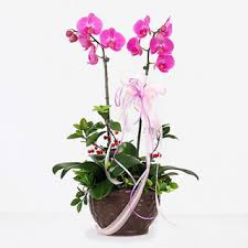 flower korea orchid flowers