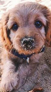 puppy wallpaper free desktop
