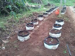 vegetable gardening kerala india