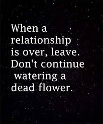 dead flower love quote heart touching love quotes friend love