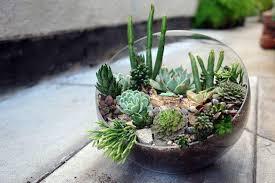 don t make a succulent terrarium here