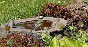 57 bird bath garden ideas seasonal