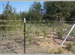 Marvellous Petsafe Invisible Fence Keeps Beeping And Petsafe Invisible Fence Battery Life Dengan Gambar