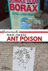 how to make homemade non toxic ant poison