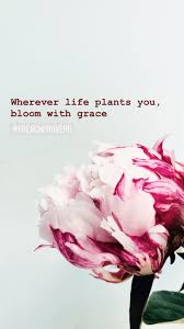 wherever life plants you bloom grace frenchproverb peonies