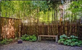 Bamboo Trees For Backyard Bamboo Landscape Backyard Garden Bamboo Garden