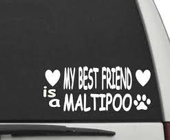 My Best Friend Is A Maltipoo Decal Sticker For Car Or Truck Etsy