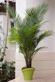 elegant palms for every setting costa