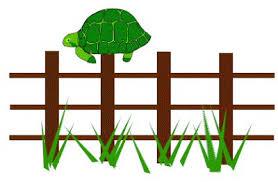 Famous For 15 Megapixels Post Turtles