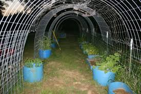 hog wire to create a tunnel