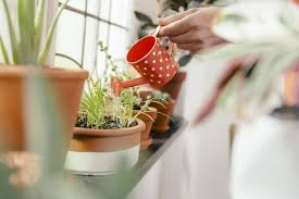 watering plants growing in containers