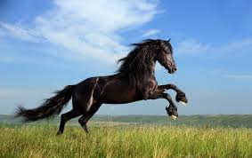 1380 horse hd wallpapers background