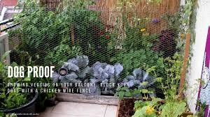 Urban Gardening Planning A Balcony Garden The Mindful Soul Center Tmsc
