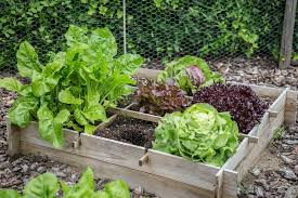 vegetable plants for small garden