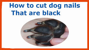 how to cut my dogs nails