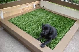 pet zen garden premium synthetic grass