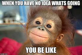 funny monkeys memes gifs flip