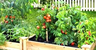 how a fruit and vegetable garden be