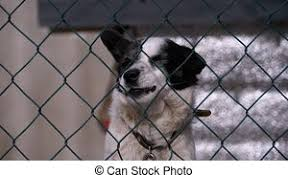 Dog Barks Behind The Fence Dog From The Slums Guards A House