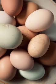 """Картинки по запросу """"яйца При затяжных бронхитах и бронхиальной астме"""""""