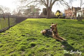 Discovering London Dog Exercise Areas The Londog