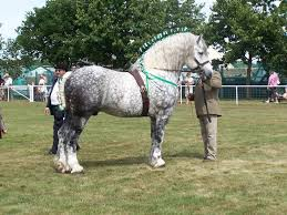 equestrian breed information breed