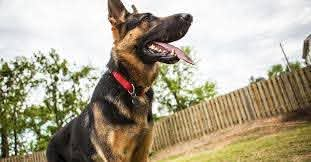 2020 Average Invisible Dog Fence Cost With Price Factors