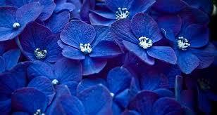 تعبیر خواب رنگ آبی آسمانی ، معنی دیدن رنگ آبی آسمانی در خواب های ما چیست -  فال و خواب