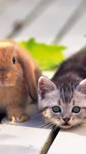 cute cat rabbit wallpaper 134556