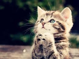 47 cute kitten wallpapers for desktop