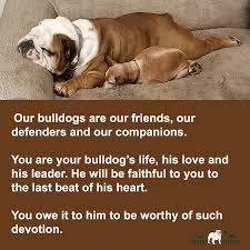 Bulldog quotes ...