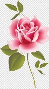 الورود خمر أصناف جميلة للمنزل والحديقة سطح المكتب وردة زهرة Png