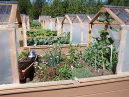 raised garden beds with greenhouse