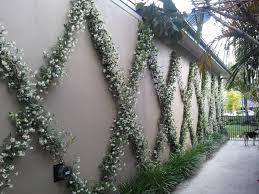 From Bare To Beautiful Courtyard Landscaping Garden Vines Garden Trellis