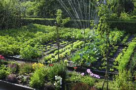 9 vegetable gardening mistakes every
