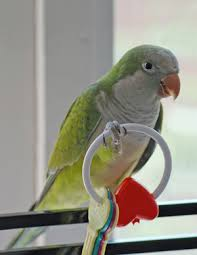 parrot toys what are we going to chew