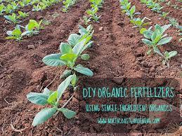 diy organic fertilizer demystifying