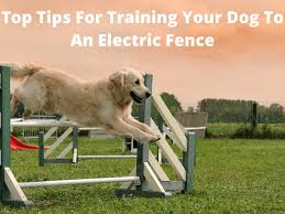 Tips For Training Your Dog To An Electric Fence Dog Fence Reviews